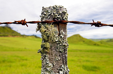 Barbed wire on post covered with moss and lichens, North Island, New Zealand