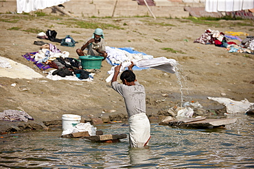 Indian man doing laundry using flogging stone in waters of The Ganges River at Cabua Pandey Ghat in Varanasi, Benares, India