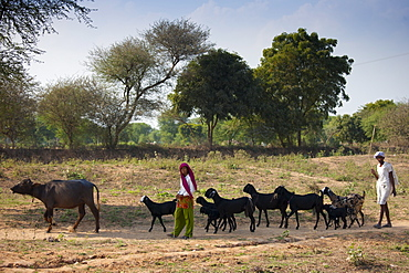 Indian man and woman with herd of goats at Sawai Madhopur in Rajasthan, Northern India