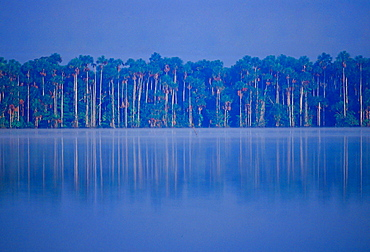 Lake Sandoval in the protected reserved zone Tambopata, Peruvian Rainforest, South America