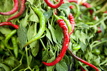 Red and green chili peppers, Capsicum pubescens, on sale in food market in Pienza, Tuscany, Italy