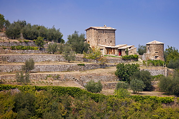 Ancient Tuscan architecture of podere farmhouse near Montalcino in Val D'Orcia, Tuscany, Italy