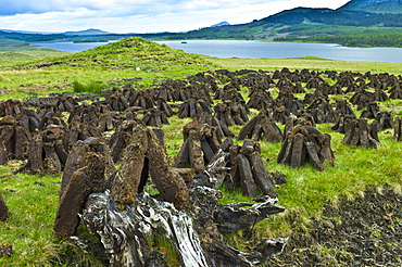 Stacks of turf, in process called footing, drying on peat bog, by Lough Inagh near Recess in Connemara, County Galway, Ireland
