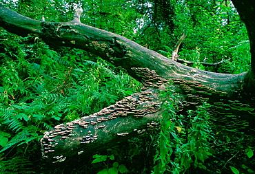 Bracket Fungus on a tree