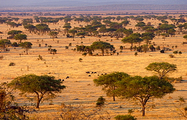 The Serengeti Plain in the Serengeti National Park, Tanzania Grumeti,Tanzania, East Africa