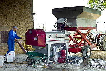 Mechanised harvesting of merlot grapes at Chateau Fontcaille Bellevue in Bordeaux wine region of France