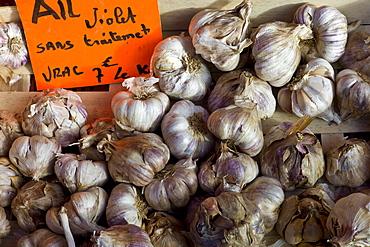 Fresh garlic violet ail, Allium sativum, at food market in Bordeaux region of France