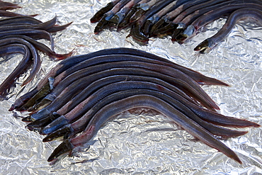 Freshly-caught eels, anguilles, on sale at food market at La Reole in Bordeaux region of France