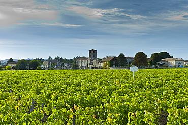 Chateau Canon vineyard at St Emilion, Bordeaux region of France