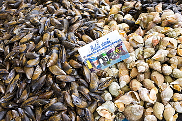Live Mussels, bulots vivant, and whelks sea snails, on sale at farmers market in Normandy, France