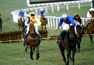 Racehorses and jockeys on the home straight at Cheltenham Racecourse for the National Hunt Festival of Racing, UK