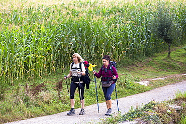 Pilgrims with rucksacks on the Camino de Santiago Pilgrim's Walk to Santiago de Compostela in Galicia, Spain, Europe