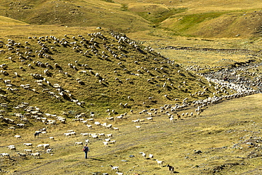 Mountain sheep and goats with shepherd in Val de Tena at Formigal in Spanish Pyrenees mountains, Spain, Europe
