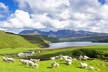 The Cuillin mountain range with croft farm, sheep and Loch Harport near Coillure, Isle of Skye, Inner Hebrides, Highlands and Islands, Scotland, United Kingdom, Europe