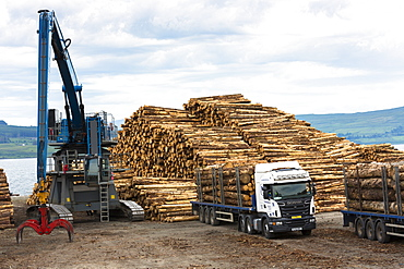 Logging and timber production and transportation at Craignure on the Isle of Mull, Inner Hebrides, Scotland, United Kingdom, Europe