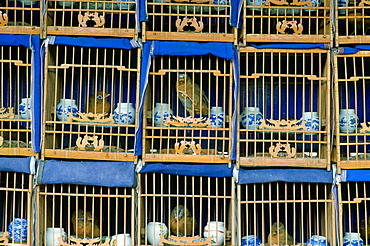 Songbirds for sale in wooden cages in a market in Beijing (formerly Peking) China
