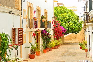 Street in Ibiza old town, Ibiza, Balearic Islands, Spain, Mediterranean, Europe
