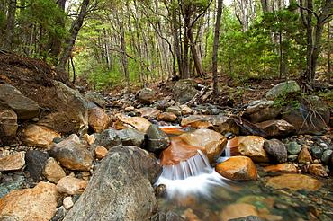River in Lopez Mountain at San Carlos de Bariloche, Patagonia, Argentina, South America