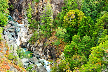 Mountain forest, San Carlos de Bariloche, Rio Negro, Patagonia, Argentina, South America