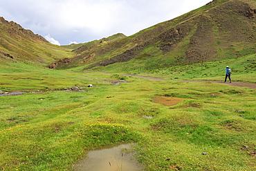 Hiker in lush Yolyn Am (Yol or Eagle Valley) with flowers after summer rain, Gurvan Saikhan National Park, Gobi Desert, Mongolia, Central Asia, Asia