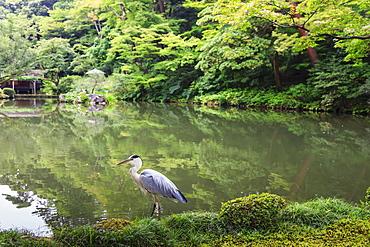Stork at Hisagoike Pond in summer, Kenrokuen, one of Japan's three most beautiful landscape gardens, Kanazawa, Japan, Asia