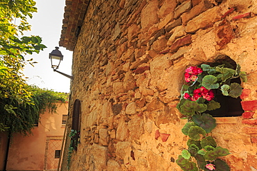 Gorgeous medieval village, geranium with pink flowers in old stone wall, Peratallada, Baix Emporda, Girona, Catalonia, Spain, Europe