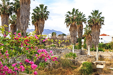 Ancient Agora, Bougainvillea and palm trees, Greek, Roman and Byzantine ruins, Kos Town, Kos, Dodecanese, Greek Islands, Greece, Europe
