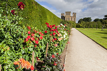 Dahlia border, pathway and lawn in late summer at Hardwick Hall, near Chesterfield, Derbyshire, England, United Kingdom, Europe