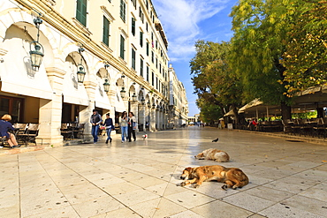 Residents and sleeping dogs, The Liston, Corfu Town, Corfu, Ionian Islands, Greek Islands, Greece, Europe