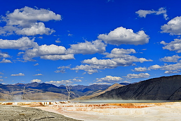 Dead trees and steam with mountain backdrop and blue skies, Mammoth Hot Springs, Yellowstone National Park, UNESCO World Heritage Site, Wyoming, United States of America, North America