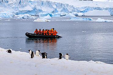 Gentoo penguins (Pygoscelis papua) and tourists on a zodiac, Cuverville Island, Antarctic Peninsula, Antarctica, Polar Regions