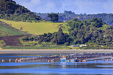 Salmon and mussel aquaculture, rolling hills and trees, Castro inlet, Isla Grande de Chiloe, Chilean Lake District, Chile, South America