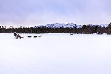 Alaskan husky pulled dog sleds speed across snowy plain in winter twilight, Alta, Finnmark, Arctic Circle, North Norway, Scandinavia, Europe