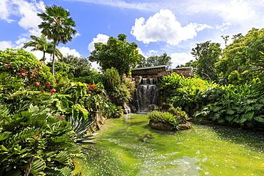 Jardin Botanique de Deshaies, botanic garden, Death In Paradise location, Deshaies, Basse Terre, Guadeloupe, Leeward Islands, West Indies, Caribbean, Central America