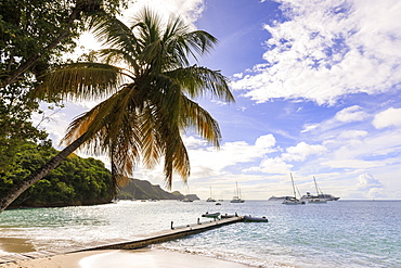 Quiet Caribbean, sea shore palm tree, boat jetty, beautiful Port Elizabeth, Admiralty Bay, Bequia, The Grenadines, St. Vincent and The Grenadines, Windward Islands, West Indies, Caribbean, Central America