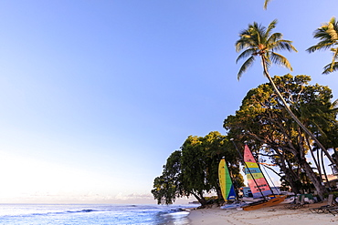 Paynes Bay, colourful sail boats on pink sand beach, sunrise, palm trees, beautiful West Coast, Barbados, Windward Islands, West Indies, Caribbean, Central America