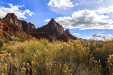 Desert brush and the Watchman in winter, Zion Canyon, Zion National Park, Utah, United States of America, North America