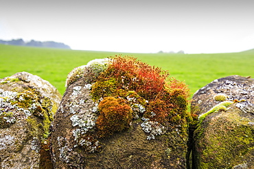 Moss and lichen on a dry stone wall near Elton on a murky spring day, Peak District National Park, Derbyshire, England, United Kingdom, Europe