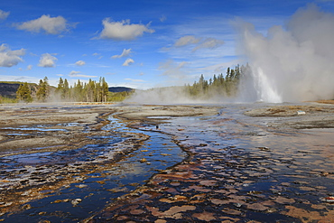 Daisy Geyser, one of the most predictable, erupts at an angle, Upper Geyser Basin, Yellowstone National Park, UNESCO World Heritage Site, Wyoming, United States of America, North America