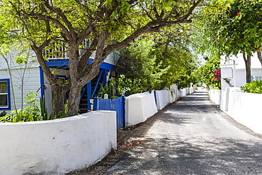 Street with trees, white wooden houses and whitewashed walls, Cockburn Town, Grand Turk, Turks and Caicos, West Indies, Caribbean, Central America