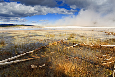 Fallen lodgepole pines, Grand Prismatic Spring, Yellowstone National Park, UNESCO World Heritage Site, Wyoming, United States of America, North America