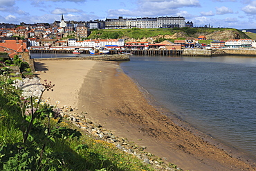 Tate Hill Beach, cliff side wild spring flowers, view to town and West Cliff, Whitby, North Yorkshire, England, United Kingdom, Europe