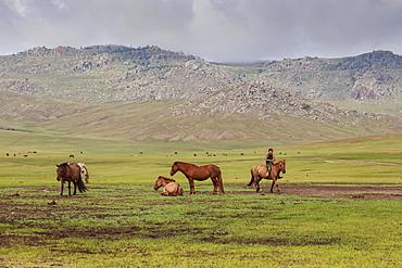 Smiling boy rides bareback past other horses, summer nomad camp, Khujirt, Uvurkhangai (Ovorkhangai), Central Mongolia, central Asia, Asia
