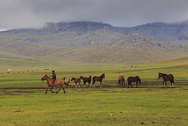 Boy rides horse past tethered horses, summer nomad camp, Khujirt, Uvurkhangai (Ovorkhangai), Central Mongolia, Central Asia, Asia