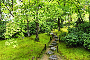 Okochi Sanso Villa garden, stone path through vibrant leafy trees with moss covered ground in summer, Arashiyama, Kyoto, Japan, Asia