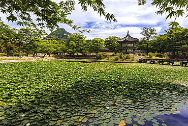 Hyangwonjeong, hexagonal pavilion on island in water lily filled lake in summer, Gyeongbokgung Palace, Seoul, South Korea, Asia