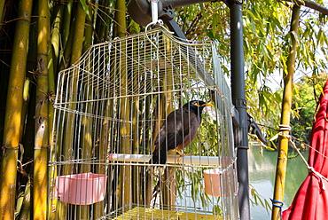 Bird in a cage in Lijiang, Yunnan, China, Asia