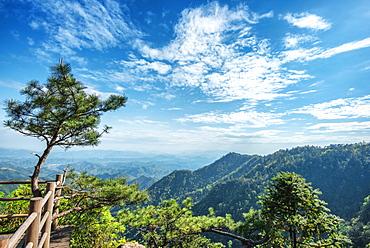Pine tree and green mountains at Tian Mu Shan Four Sides peak, Zhejiang, China, Asia