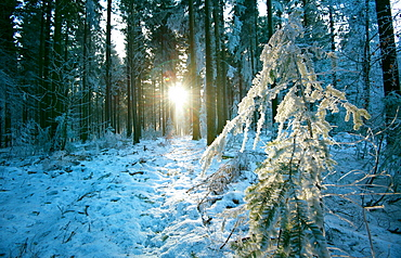 The sun finding a small opening in the snowy forest of Koenigstuhl, Heidelberg, Baden-Wurttemberg, Germany, Europe