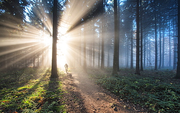 Fan of light rays and trail in a misty forest, Baden-Wurttemberg, Germany, Europe
